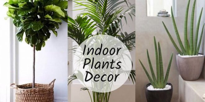 Why should one use indoor plants for home decor?